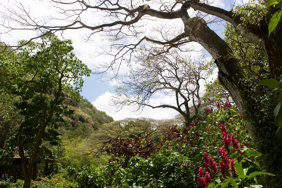 Photo nature de Hawai